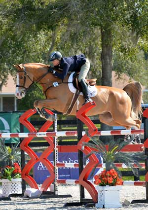 Tracy Fenney and MTM Timon clear a huge red and blue jump on course at HITS.